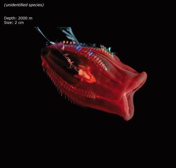 Beautiful Creatures in Mariana Trench, Deepest Place in ...