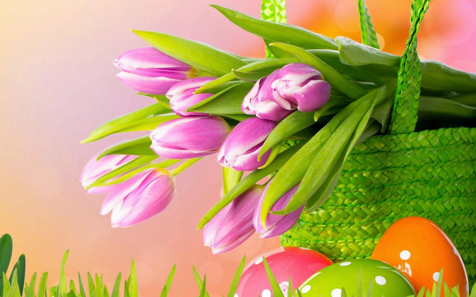 tulpen achtergrond met een - photo #36