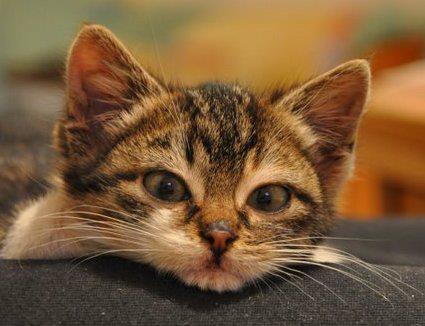 Jeśli chcesz, możesz. Pomóż kotom.