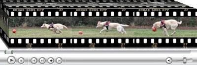 http://www.blog.adelhaid.de/2013/11/hundesteuer-und-diensthundehalter.html