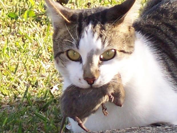 henri the chat noir