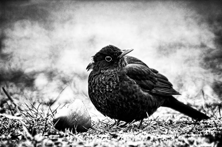 Bird © 2011 Istvan Kerekas