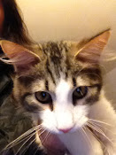 ADOPTED!!  SCAMPERS / SAM