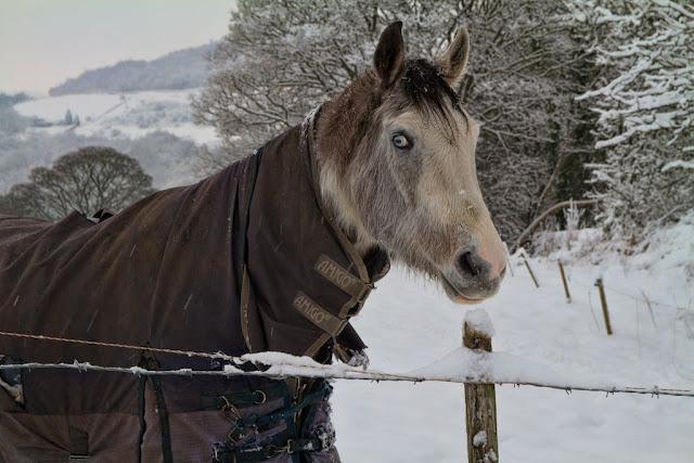 Scary Eyed Horse