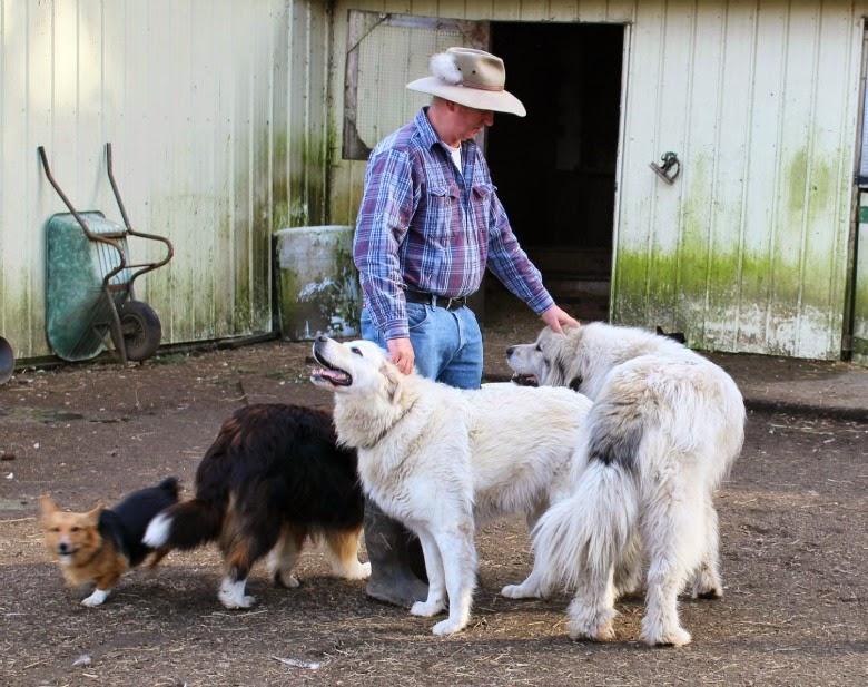 Farmer and his dogs