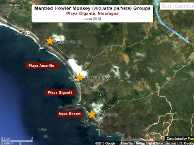 Locations of howler Monkeys in Playa Gigante