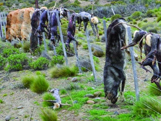 matanza-perros-Argentina