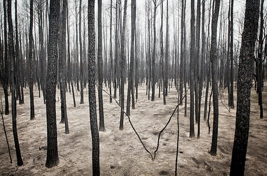 The Lost Pines after the 2011 Bastrop Wildfire.  Courtesy of AdobeAirStream
