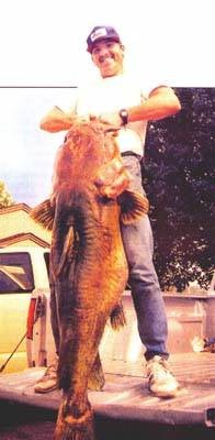 Big fishes of the world catfish flathead pylodictis for Kansas fish records