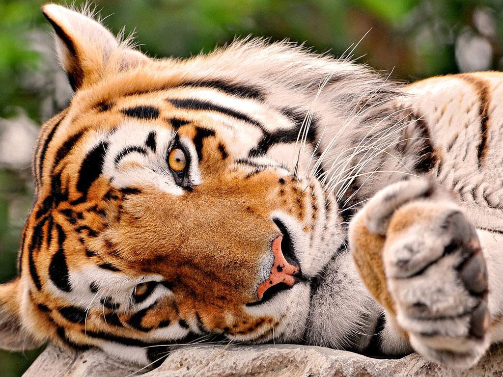 Links da web wallpaper de animais selvagens for Sfondi animali hd
