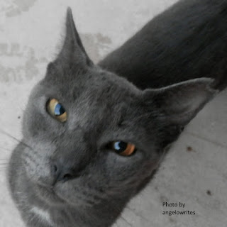 gray the cat on angelowrites