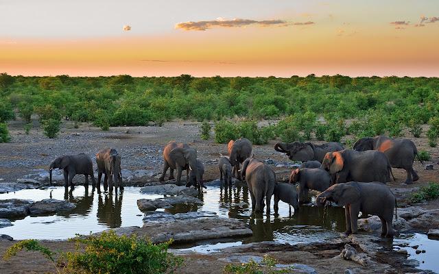 elephants,drinking water, wallpapers, nature, desktop, HD, HQ, tapandaola111