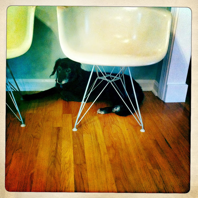 Eames eiffel shell chair dog