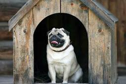 Anjing Peliharaan Telan Berlian Seharga Rp360 Juta