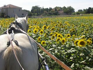 Concours Photos Aout : Des Chevaux et des Fleurs P7030129