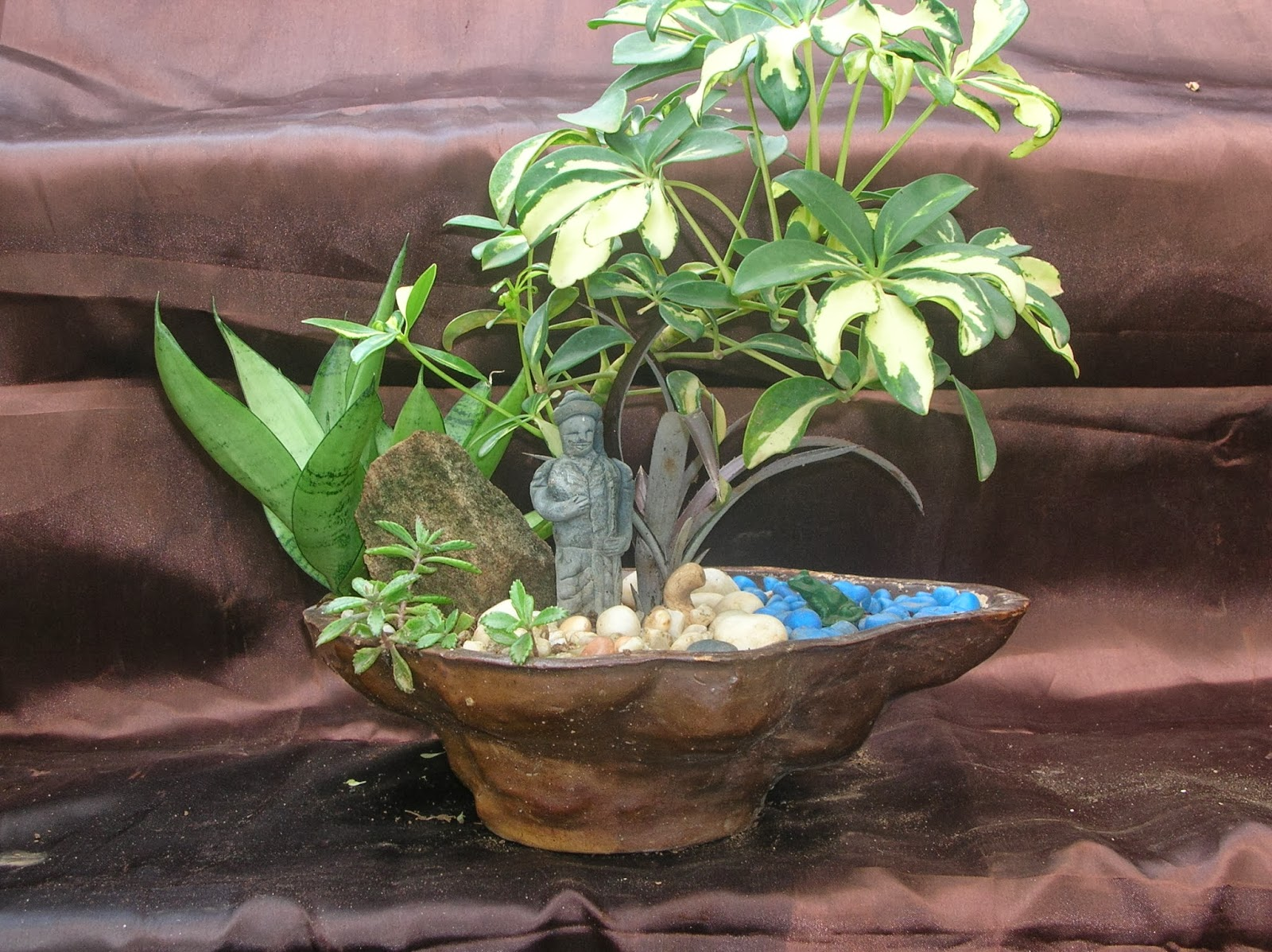 Bonsai Trees And Plants In Ahmedabad For Sale May 2013