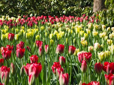 Flores en el Parque Keukenhof