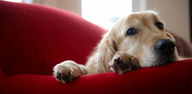 Delitos relativos a animales domesticos y Derecho penal