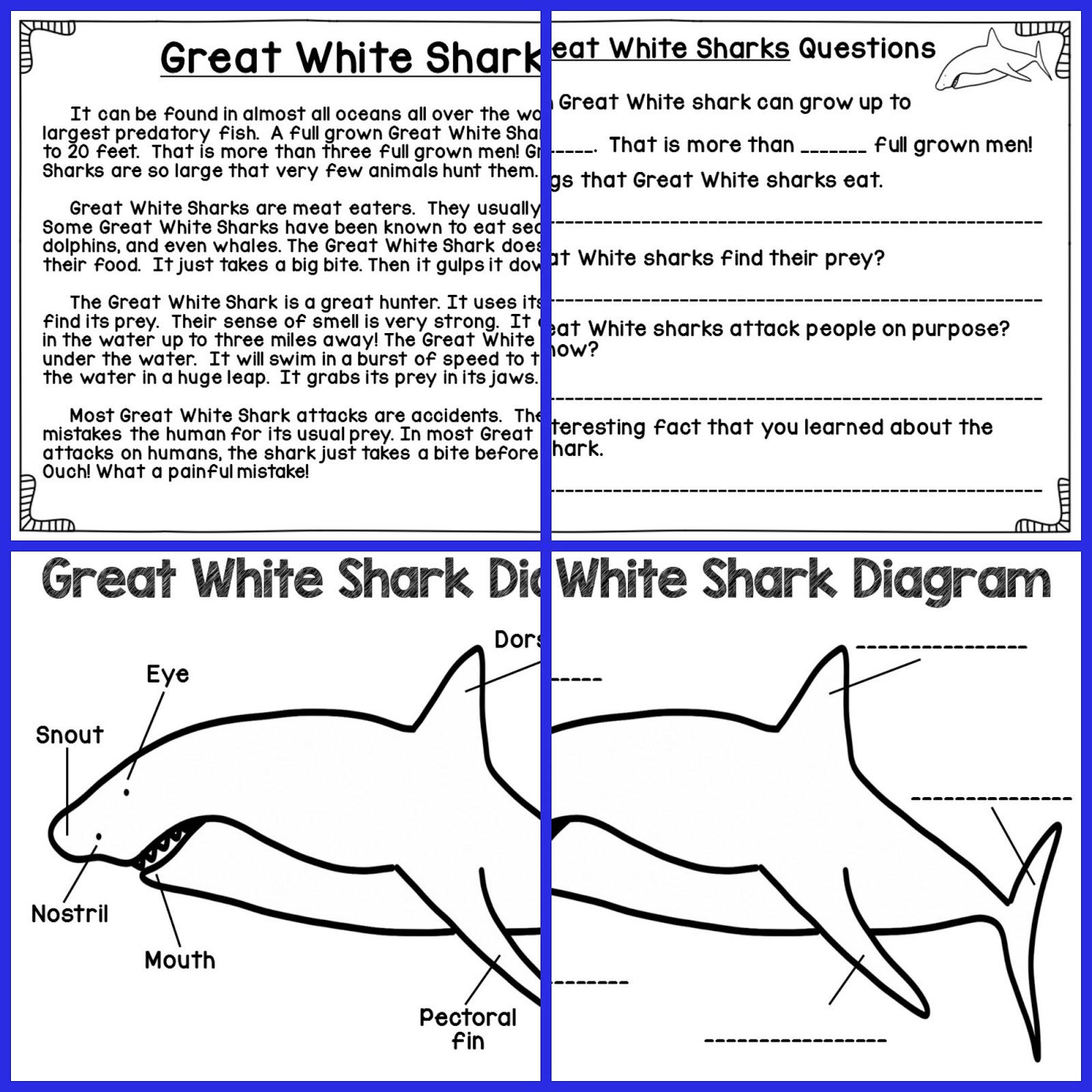 The Fabulous Life of an Elementary Teacher: Shark Week Blog Hop ... for Great White Shark Diagram  177nar