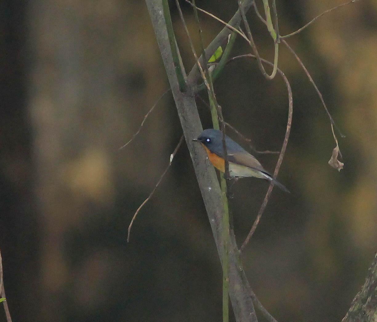 Vietnam Bird News  January 2013
