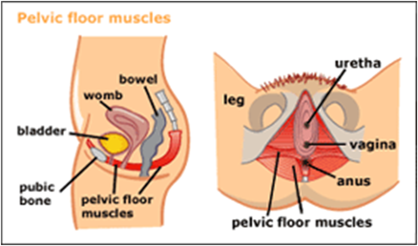 chronic low back pain and pelvic floor muscle strengthening Pelvic floor exercises are effective in helping all kinds of women regain control of a weak bladder whether you're a newbie or a pelvic floor pro, these gentle pilates exercises are designed to help strengthen your pelvic floor muscles, making them fit and firm to help you regain confidence and.