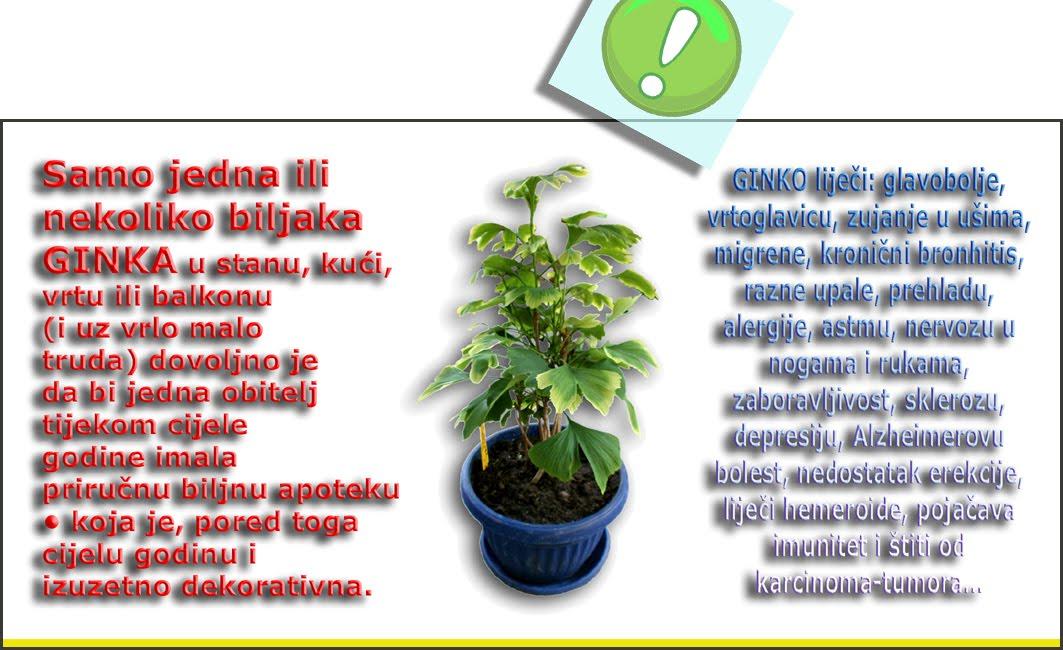 Već samo jedna biljka u kući prirodna je i priručna apoteka!
