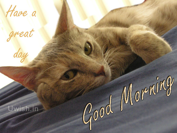 Good Morning. Have a Great Day with cats look.  Good Morning and Great day wishes and e greeting cards