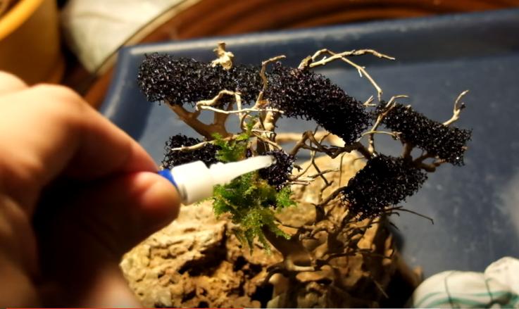 Dùng keo dán rêu thủy sinh vào miếng nhựa