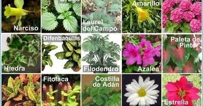 Plantas toxicas o peligrosas jardin botanico for Plantas ornamentales y medicinales