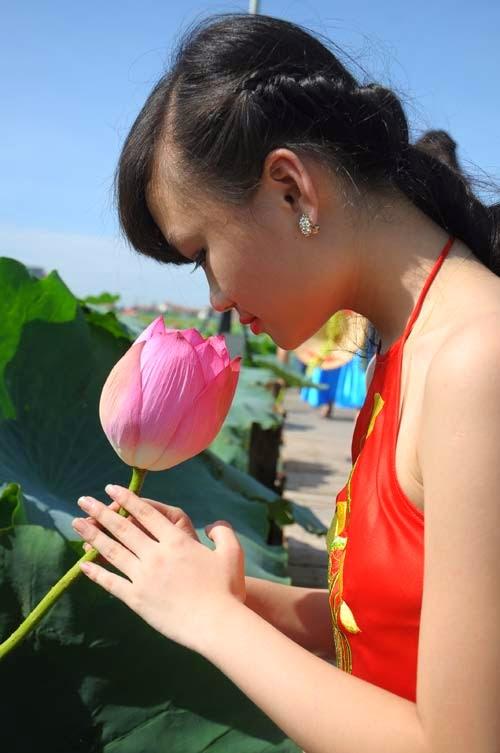 Anh dep hoa sen
