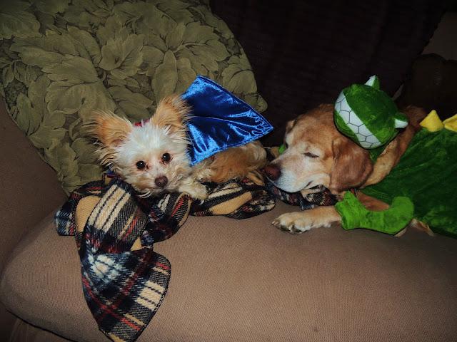 Target Dog Halloween Costumes Images & Dog Halloween Costumes Target - Meningrey