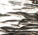 www.ivanierdesigns.com