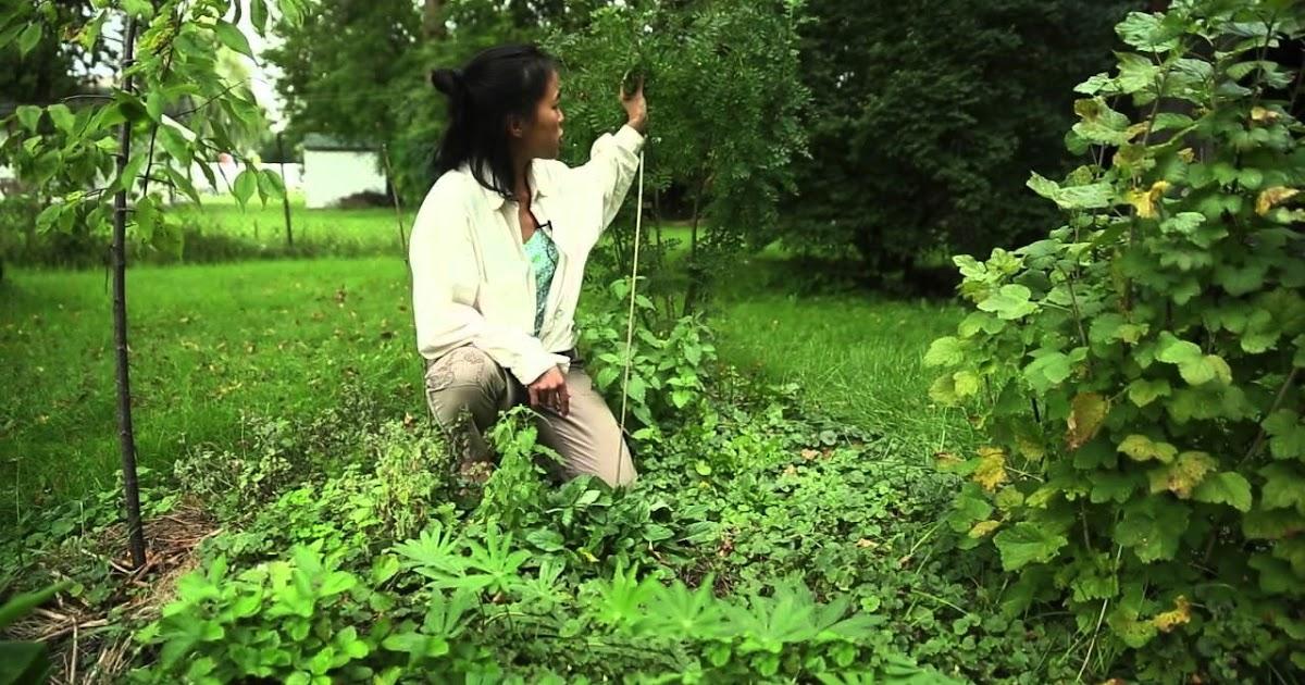Alalumieredunouveaumonde concevoir son jardin et sa vie for Jardin permaculture 2015