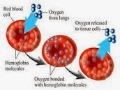 Kenali Tanda dan Gejala Anemia Megalobalastik