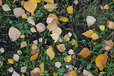 Grass and yellow leaves ground textures