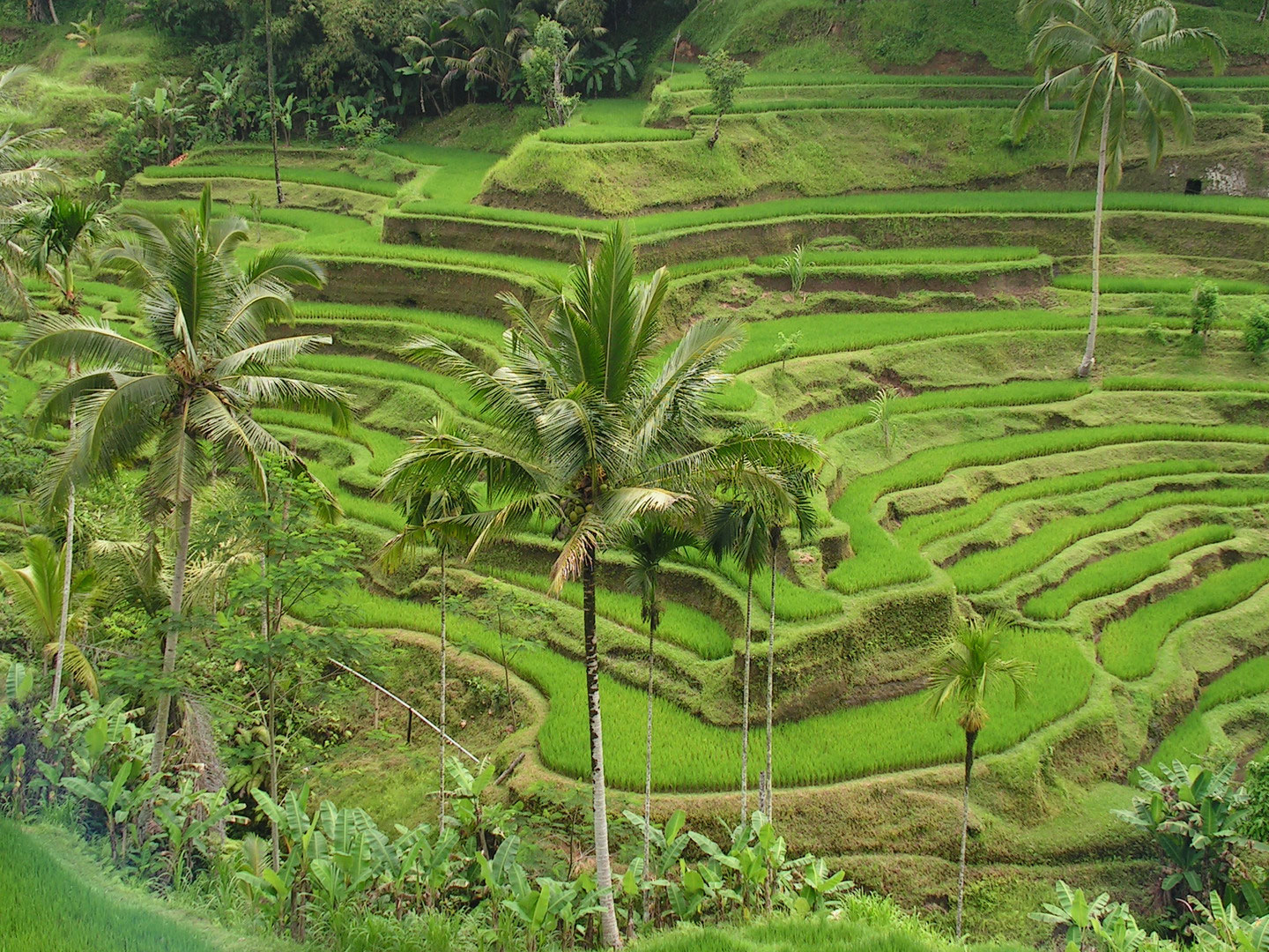 the subak bali's irrigation system cultural Home learn  articles  managing a living cultural  managing a living cultural landscape: bali's subaks and the unesco world  the subak system,.