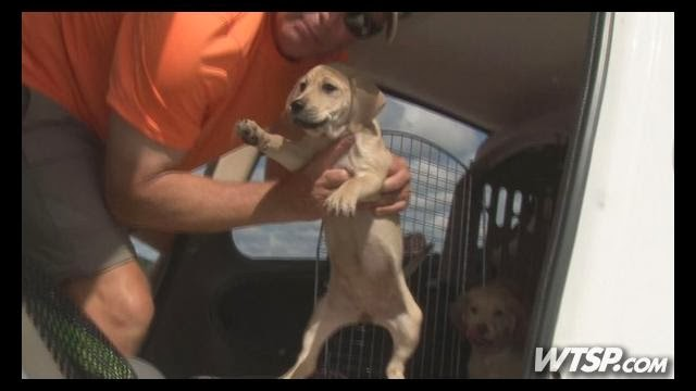 Pilot N Paws fly 400 rescued shelter dogs on Saturday to new lives! (Video)