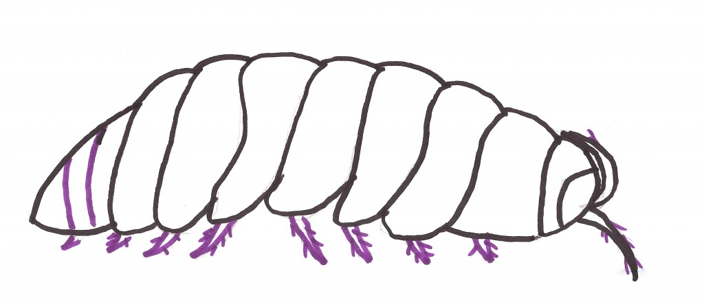 How to draw a pillbug roly pollie artist stephanie weaver for How to draw a pill