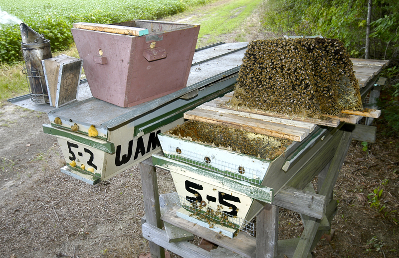 che guebee apiary 200 top bar hives beekeeper