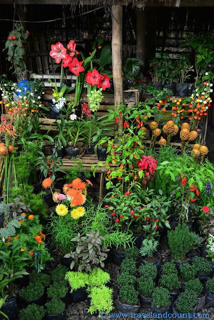 Mambukal Flowers