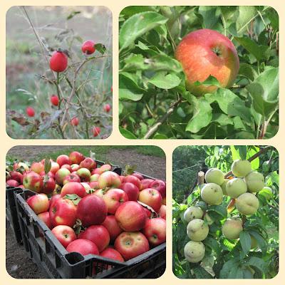 осенний коллаж, персик, яблоки, шиповник