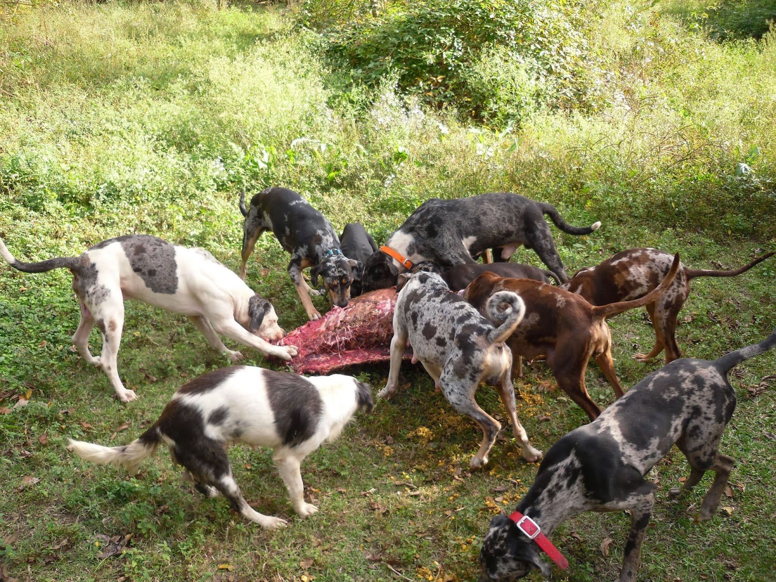 Will Dogs Eat Raw Deer Meat