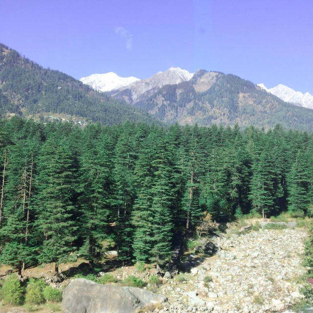 Pine forests in Himalayas
