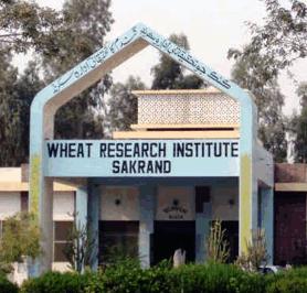 Wheat Research Institute Sakrand
