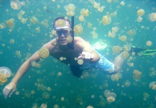 بالصور و الفيديو : بحيرة قناديل البحر فى جزيرة بالاو – اسبح مع ملاين القناديل دون أن تتعرض للإذى 1.jpg
