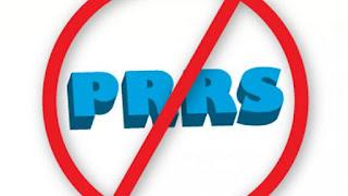 Loại trừ dịch bệnh PRRS ra khỏi trang trại
