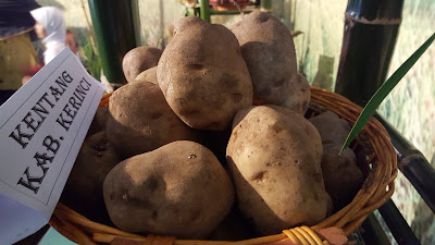 Health Benefits of Potato For Lose Weight (Diet Healthy)