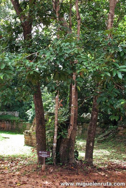 Semoan-Ta-Som-Angkor
