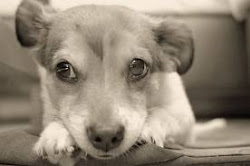 Descobre como ajudar participando num concurso de fotografia  / Photography to help animals