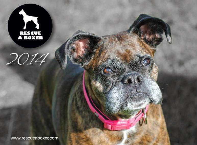 We Want YOUR Boxer - well..... For our Calendar